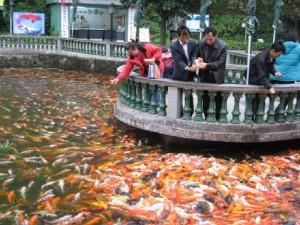 fish-overload