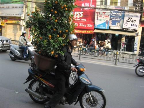 orange tree on motorbike